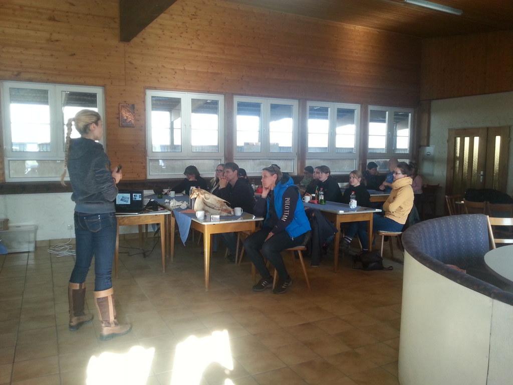 Reit- und Fahrverein Külsheim e.V. - Kurs BIOMECHANIK Sarah Buchner ...